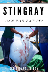 can you eat stingray meat