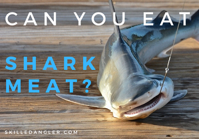 can you eat shark meat and how to prepare shark meat