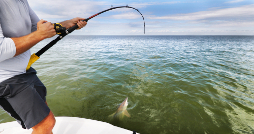 fishing in the ocean for fresh shark meat