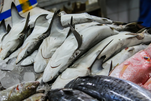 shark meat for sale in a fish market