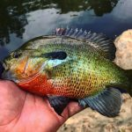 best rod and reel combo for bluegill crappie panfish