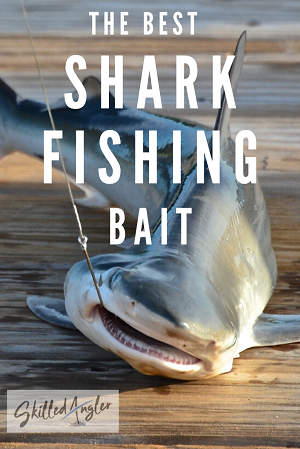 best shark bait for florida shark fishing